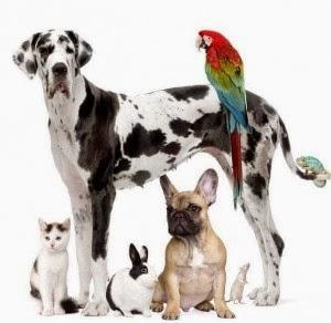 como elegir una mascota