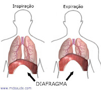 Diafragma - hipo