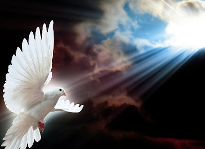 White dove as a message from the dead