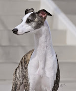NUMBER THREE