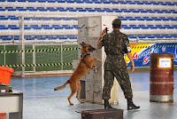 Cães farejadores participam das provas de detecção de armas e entorpecentes durante a competição