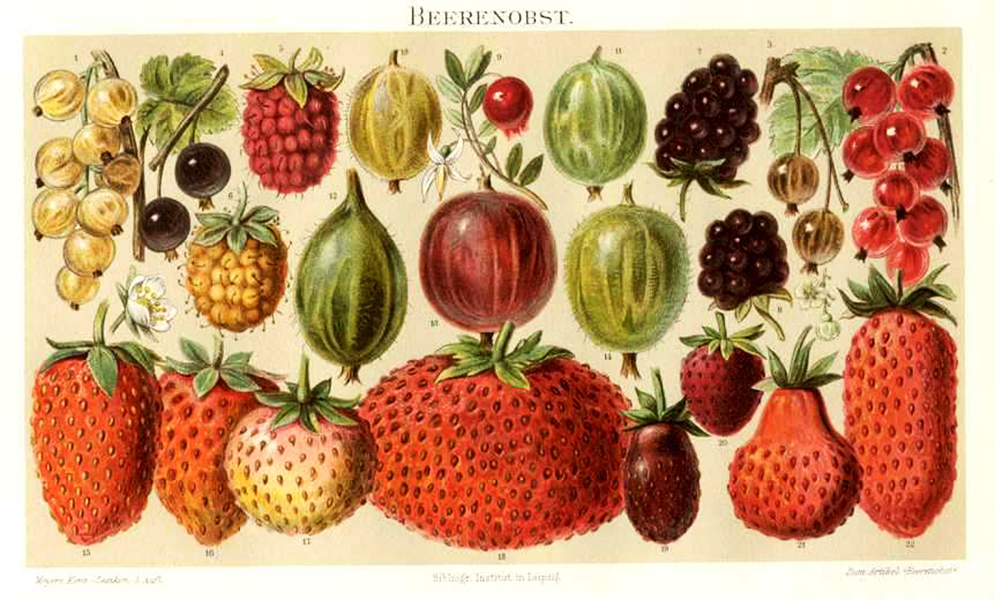 fruit strawberries 4 - photo #36