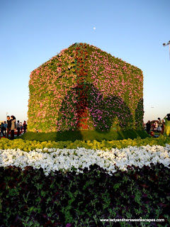 Cubes at Dubai Miracle Garden