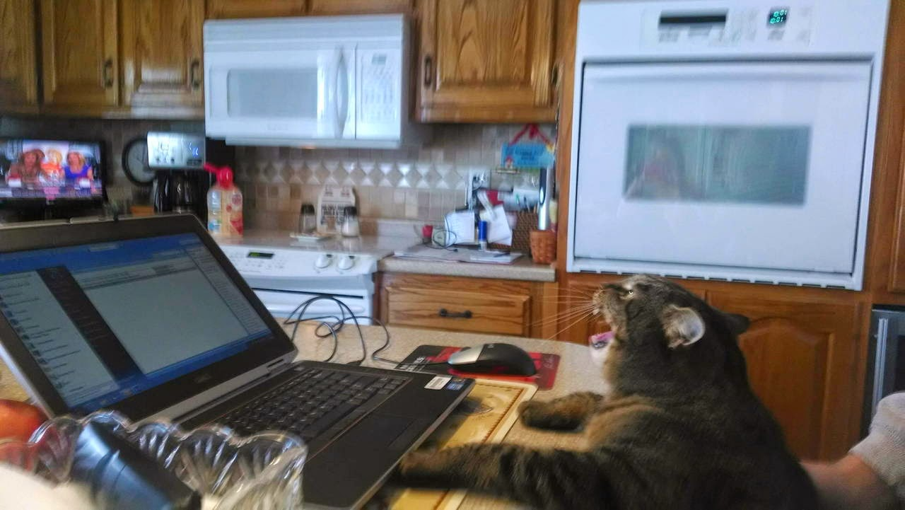 Funny cats - part 99 (40 pics + 10 gifs), cat pictures, cat in front of laptop
