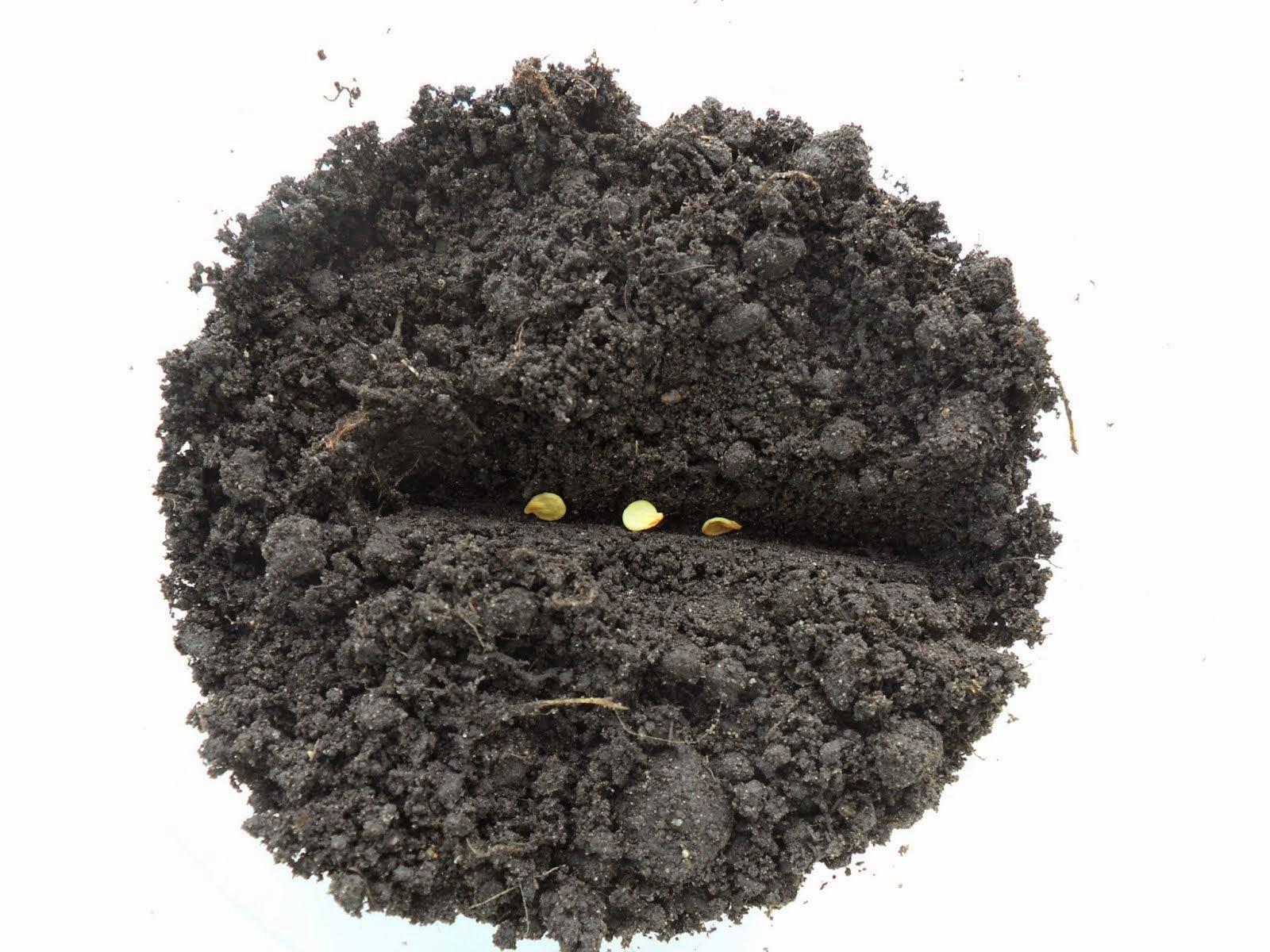 Посев рассады помидоров и перцев
