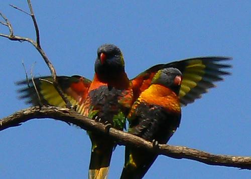 Animales aéreos. | diversidad de animales.