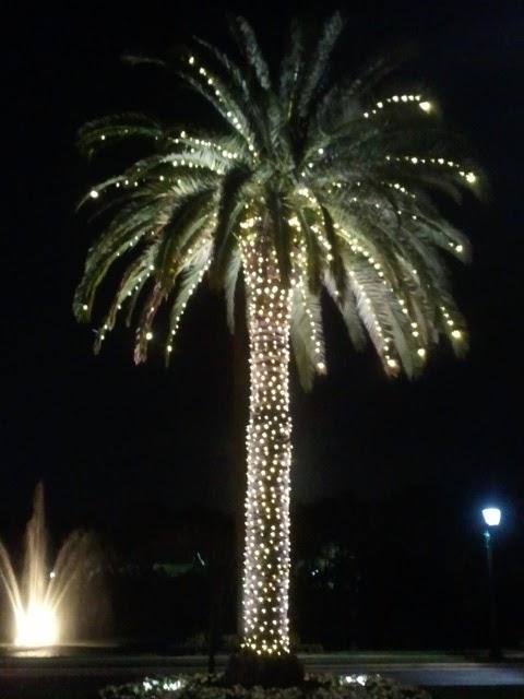 Northern light december
