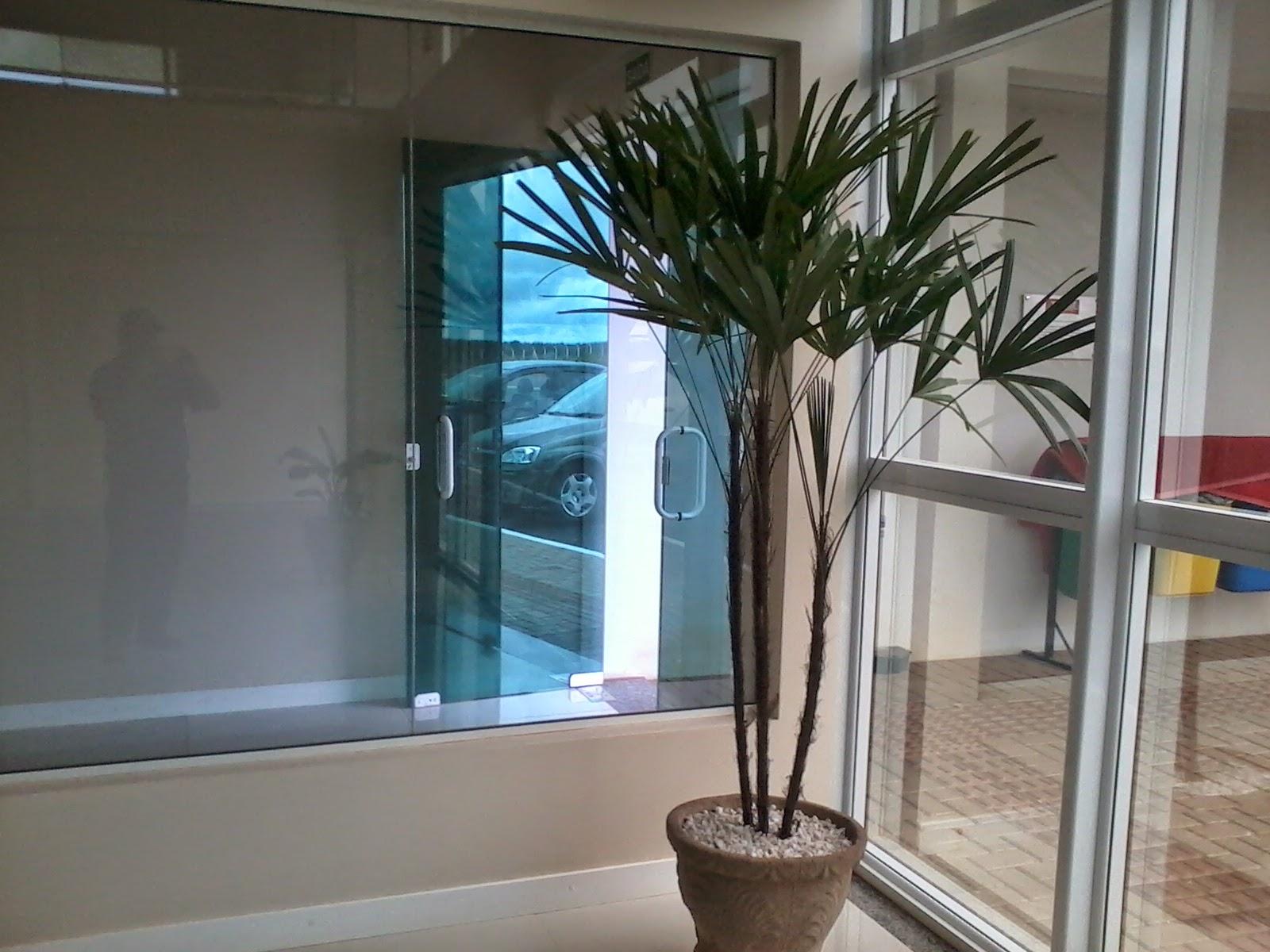 Plantas para ambientes bela  Vista