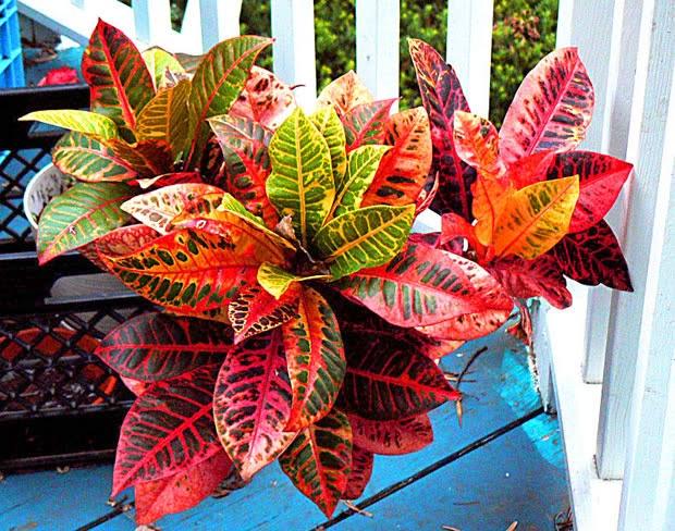 Flores e jardins plantas jardinagem e paisagismo 5 for Plantas de interior lidl