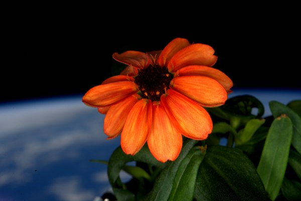 space flower Scott Kelly