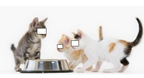 Muezza Kucing Kesayangan Nabi Muhammad Saw Kucing Gue