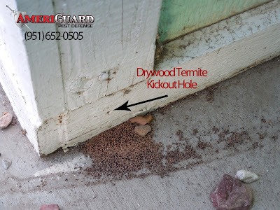 Drywood termite kickout holes