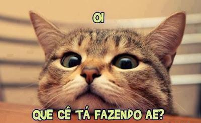 Imagens de Gatos para compartilhar no Facebook