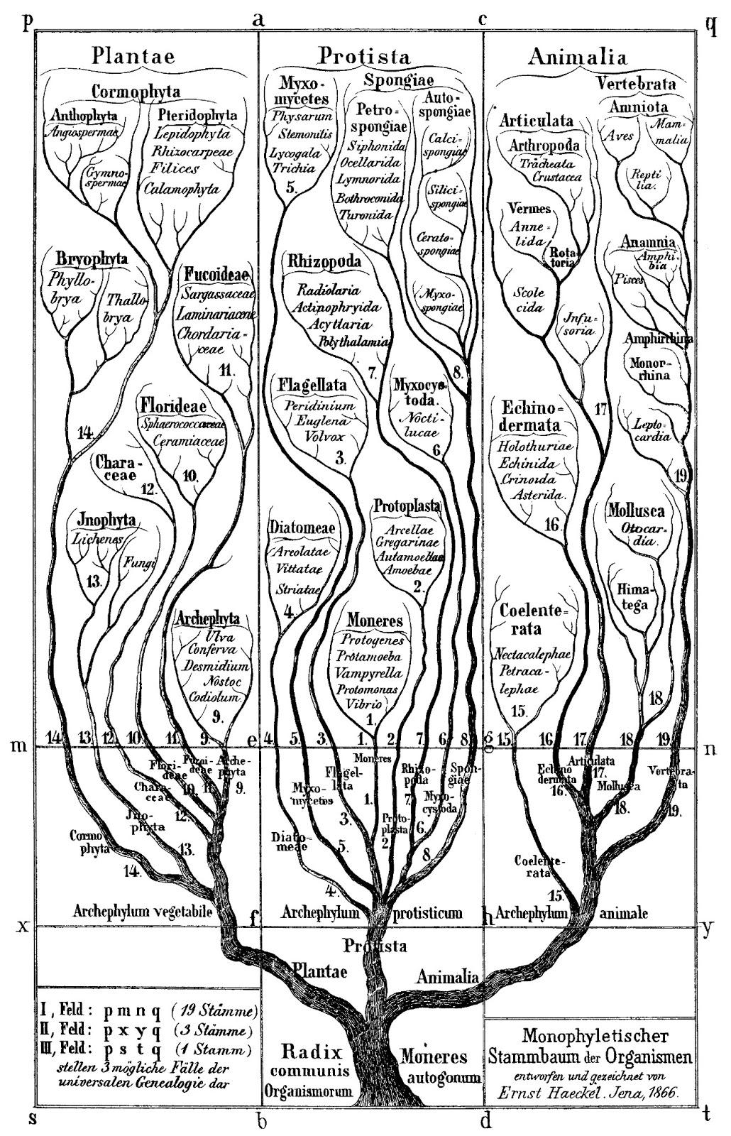 La adivinación del árbol de Darwin — una tarea sin fin | SEDIN ...