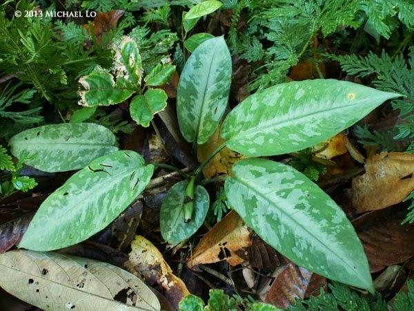 plants jungle Southeast asian