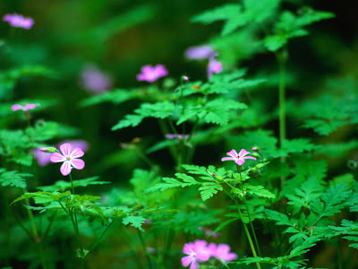 Forest Flower Picture Wallpaper