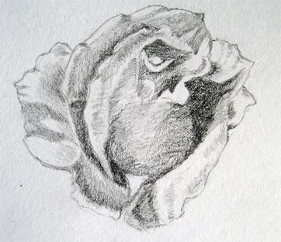 WIP Rose Sketch