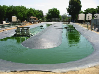 Comparing different high rate algal raceway pond designs for Design of maturation pond