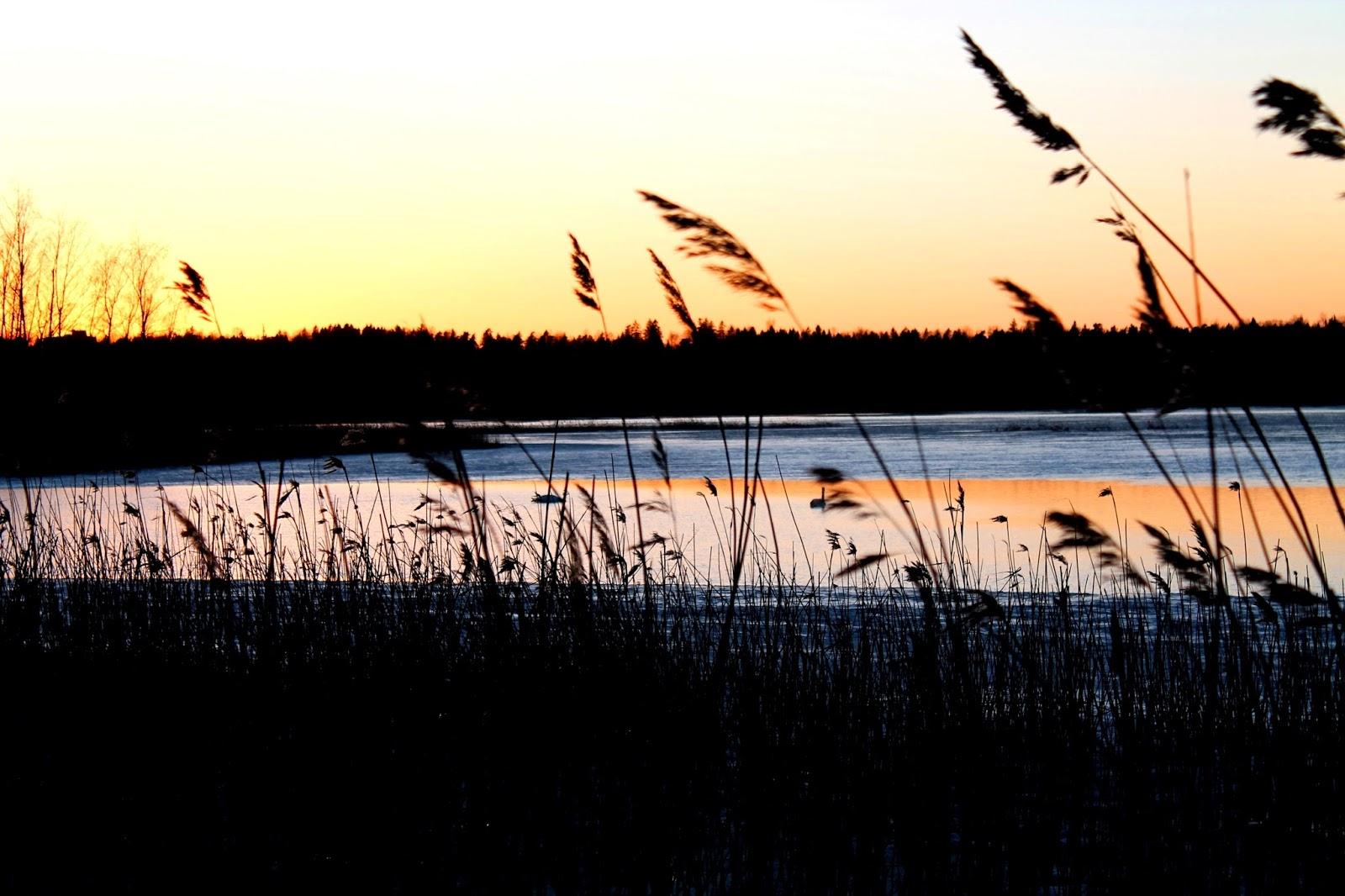 sunset, auringonlasku, skyfall, evening, ilta, morning, twilight, aamu, punainen, red, liukuväri, jää, ice, sea, meri, järvi, lake, river, joki, ranta, beach, olki, kaisla, puu, tree, sun, aurinko, syksy, talvi, kevät, autumn, fall, winter, spring
