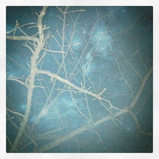 paper squid blog and instagram