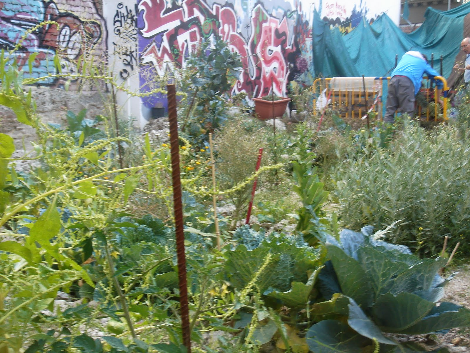 El cont mismo junio 2011 for Arreglar jardin abandonado