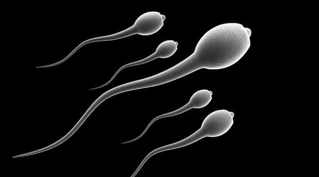 sperma-na-hranenie