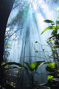 Ketika Hati Mulai Lelah. ♥ Ketika Hati Mulai Lelah♥ (jungle dreaming iphone wallpaper hd)