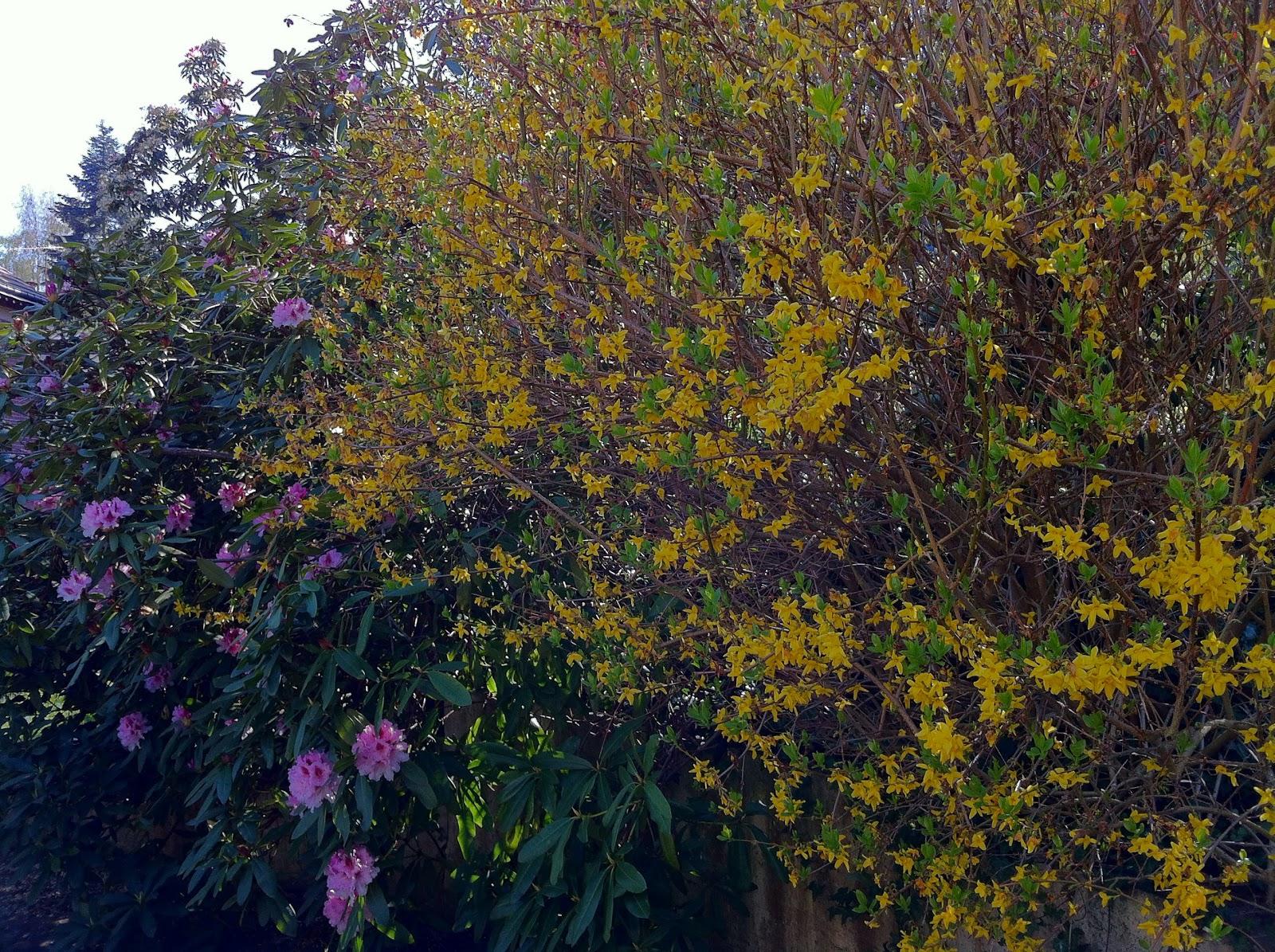 Mon jardin imparfait avril 2013 for Le jardin imparfait