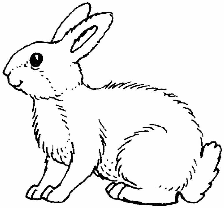 Cute animal rabbit coloring books sheet for kids drawing title=