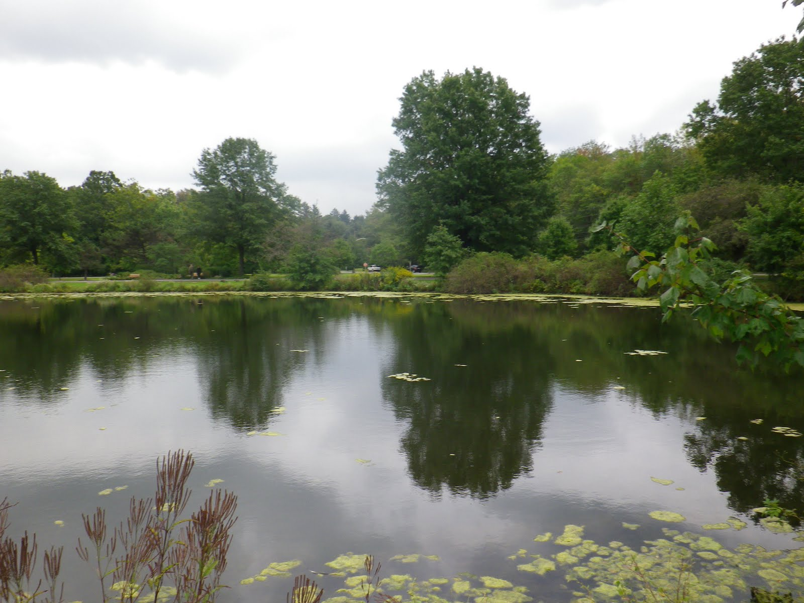 Wooddale park pond the great lakes of nyc for Private fishing ponds near me