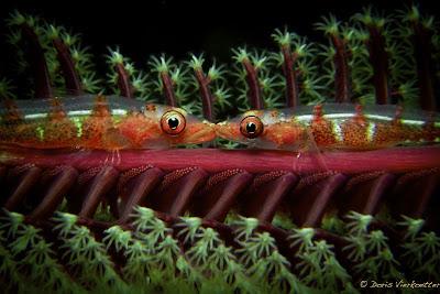 fish-kiss_underwater