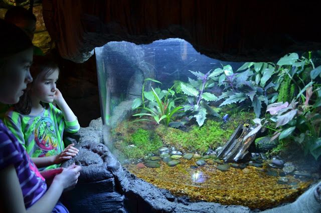 Ripley's Aquarium of the Smokies, poisonous frogs