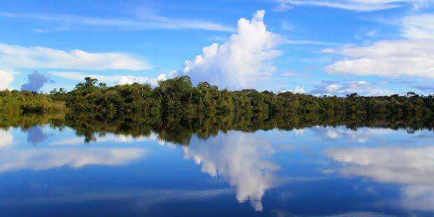 Estimada Amazònia
