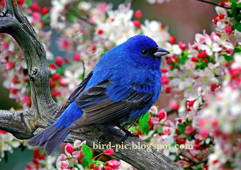 Bird Breeds Pictures Information