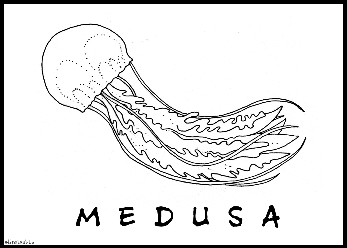 El draghillo animale del mese le meduse for Medusa da colorare
