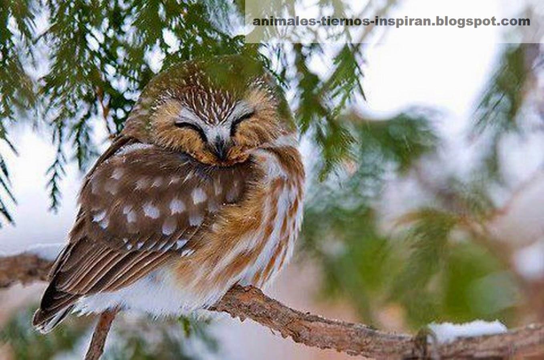 Почему птицы во сне не падают с деревьев