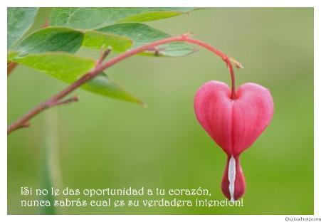 Arbol del amor
