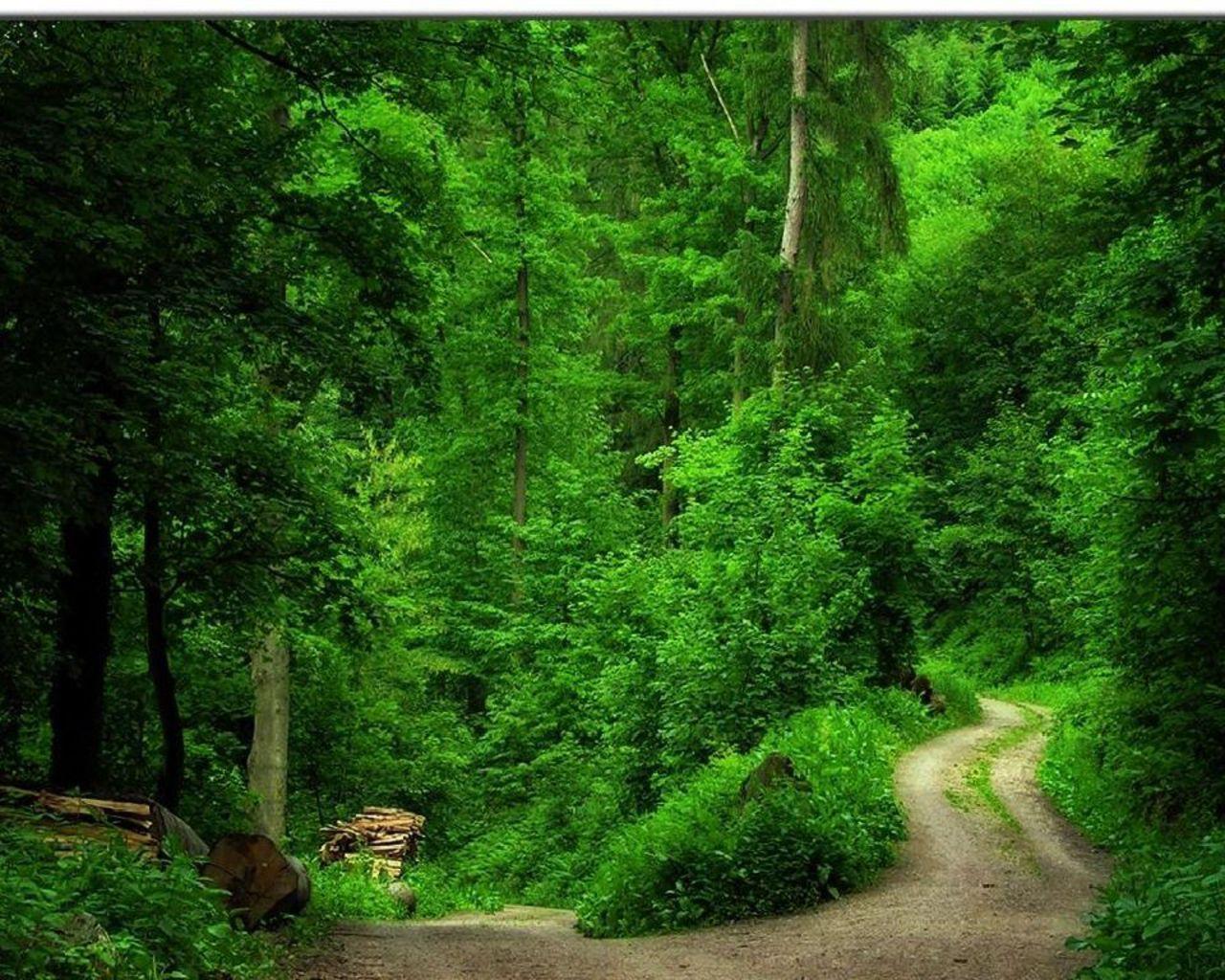 http://4.bp.blogspot.com/-aACifEepwO4/T77IFwwLIKI/AAAAAAAAE1s/O1ItMgI9uCg/s1600/Green-Forest-Wallpaper-green-20036570-1280-1024.jpg