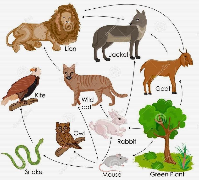 Human+Food+Chain 140 Food web | Biology Notes for IGCSE 2014