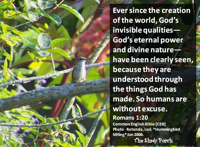 Hummingbird Sitting #scripture #Bible #Romans #nature