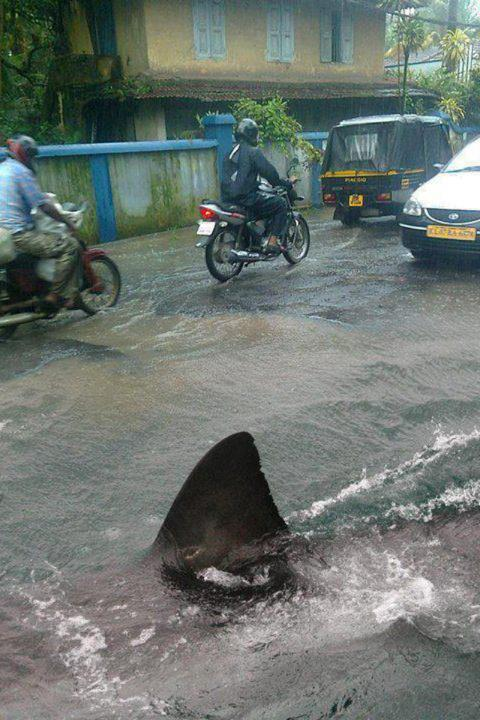 manila-philippines-shark-on-the-road-funny-photos-pinoy - Manila Floods Infested with Sharks - Philippine Photo Gallery