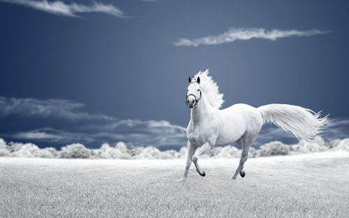 Caballo corriendo libremente - Horse - Cheval