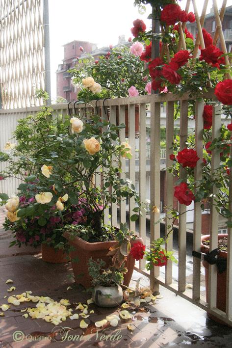 Piante Balcone Est : Quattro toni di verde due terrazzi fa