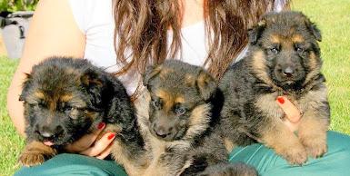 Σχολή Εκπαίδευσης Σκύλων Piero
