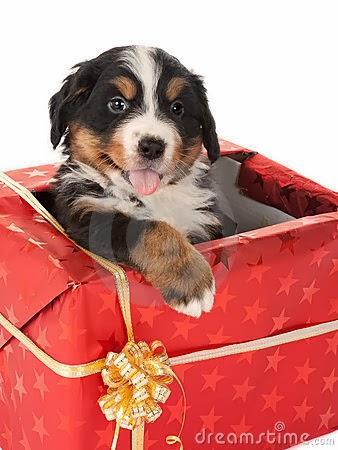 El regalo perikos