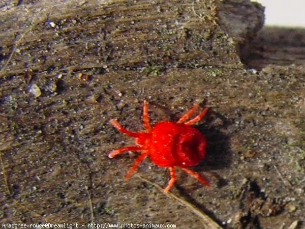 Insecticide bio maison contre araignées rouges