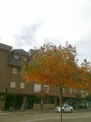 Árbol multicolor