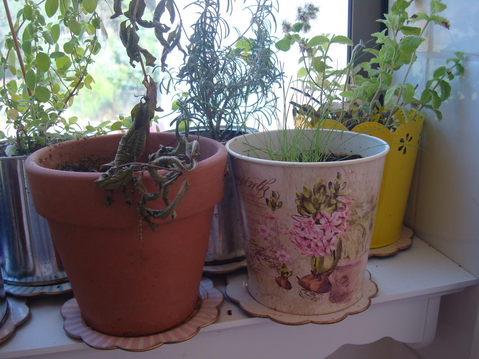 La casa de la laguna plantas arom ticas para la cocina for Macetas para cocina