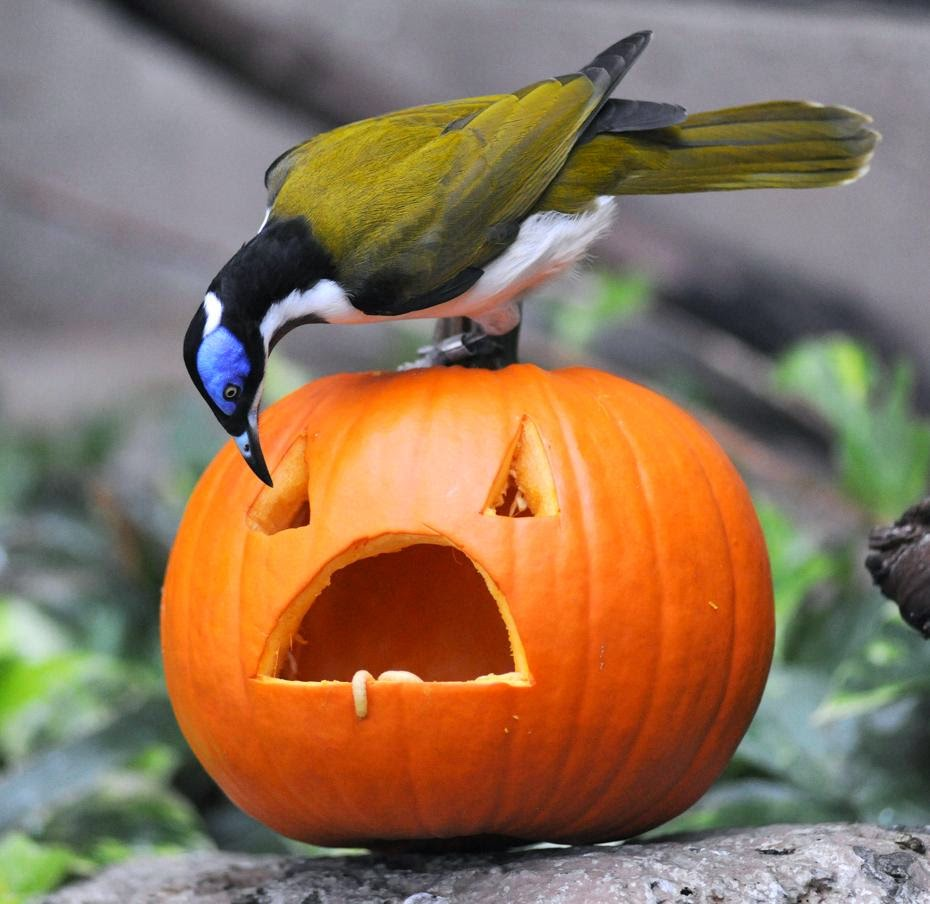 Funny halloween animals 28