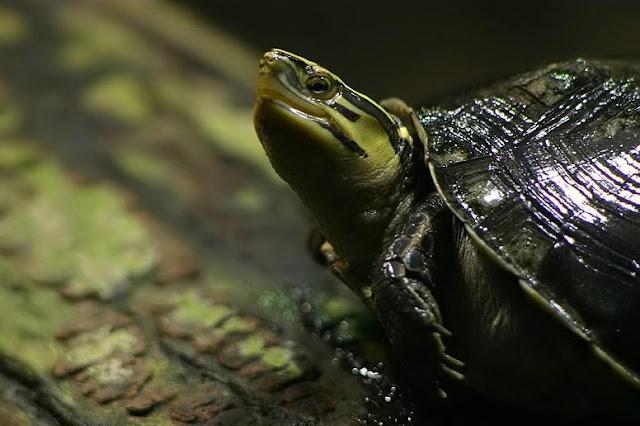tank and this habitat should be semi aquatic not terrestrial